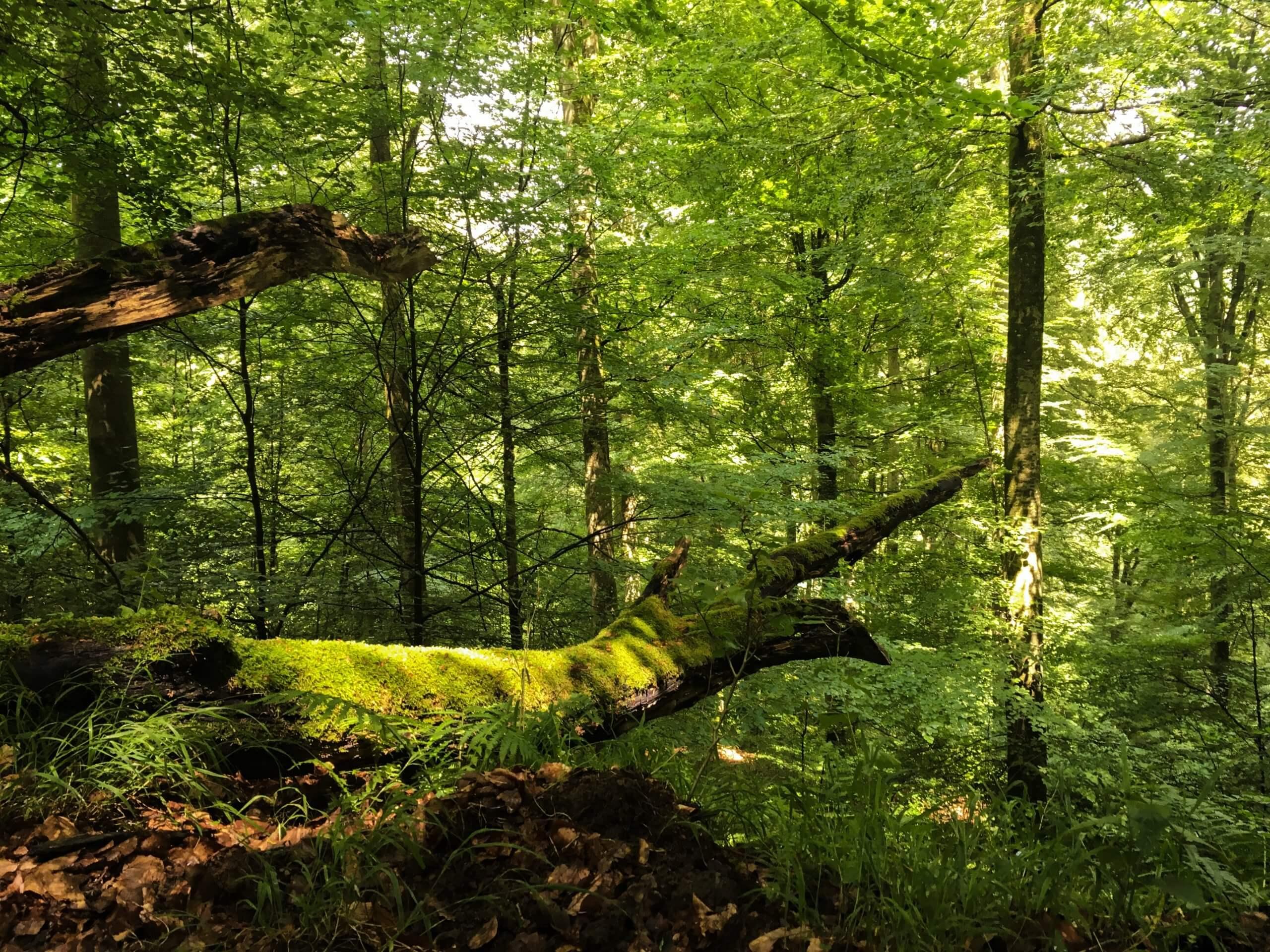 Lebewesen Baum
