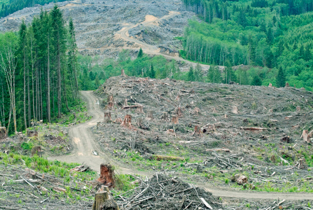 Clearcut on managed forest land in Washington state