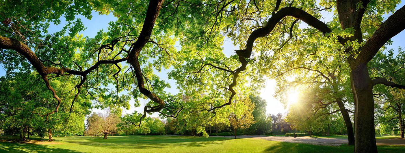 Bäume bestimmen